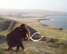 pygmy mammoth solo