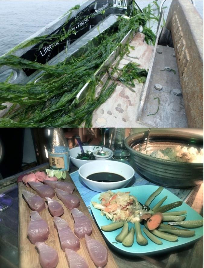 seaweed anchor