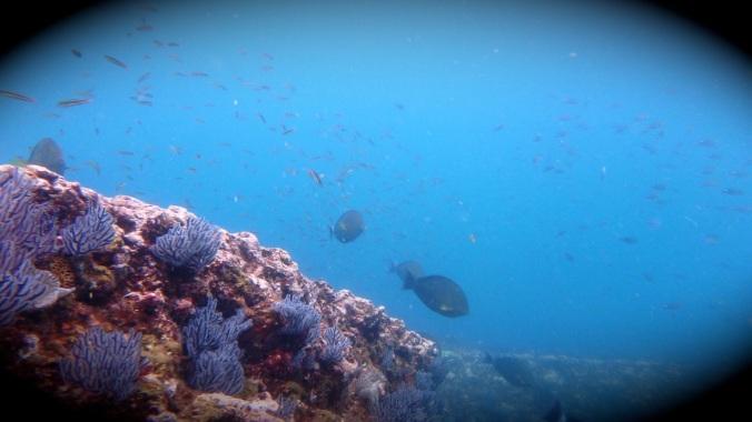 Isabel underwater magic
