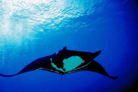 cano-scuba-diving-2