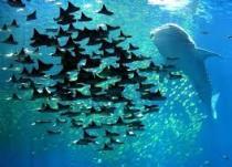 coiba underwater