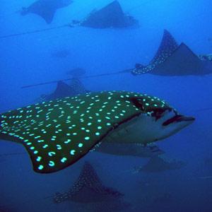 Costa-Rica-Playas-Del-Coco-Catalina-Deep-Blue-300px