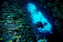 Scuba-Diving-in-Costa-Rica1