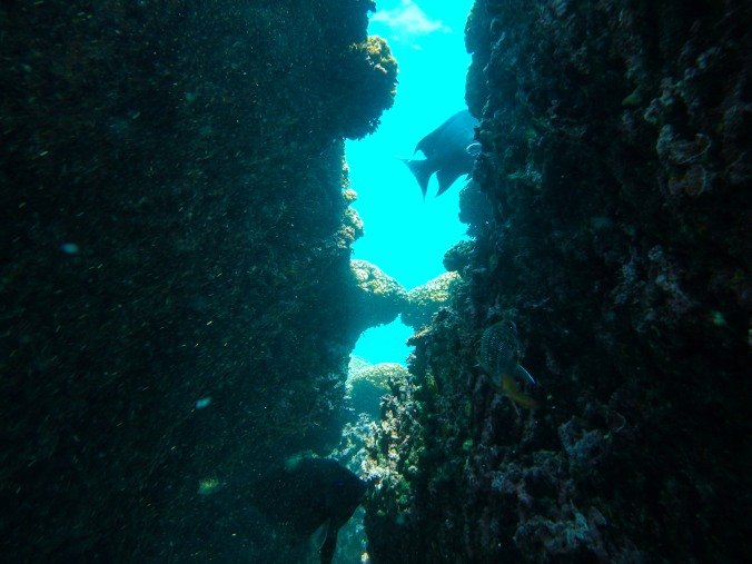 This was a neat coral crevace with tons of fish around