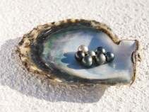 Prize #5. Marquesas Pearls