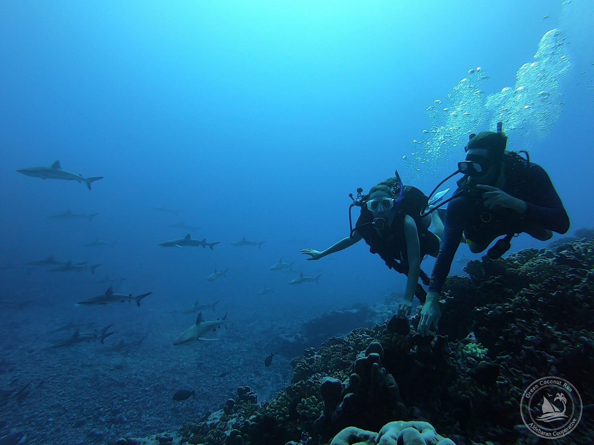 Fakarava shark wall-sm